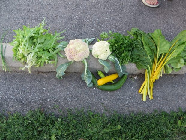 produce from garden
